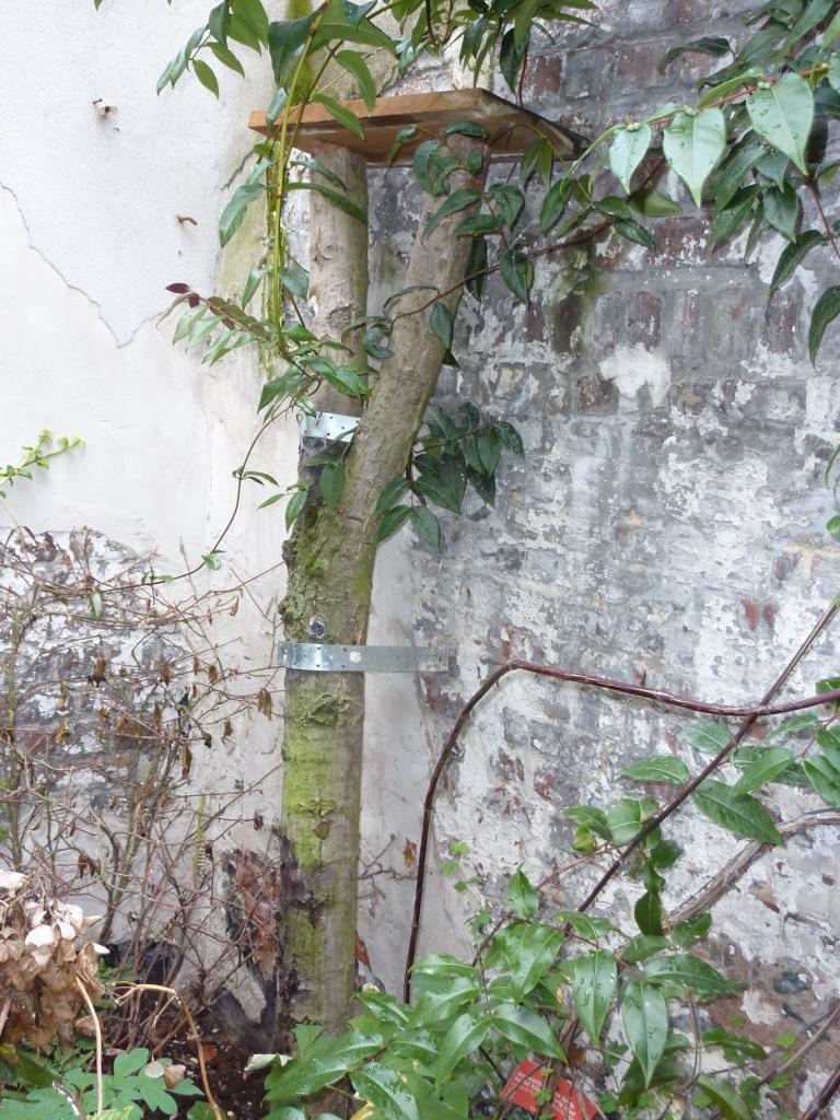 tak van een boom