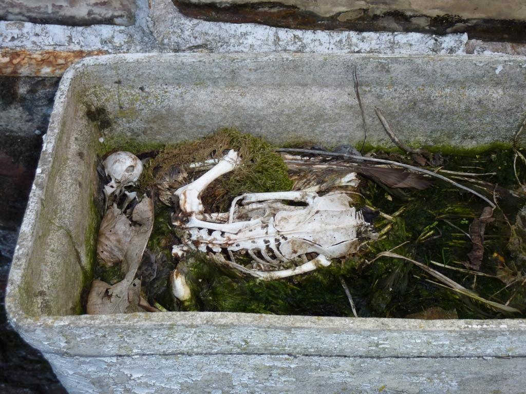 duivenskelet in bloemenbak