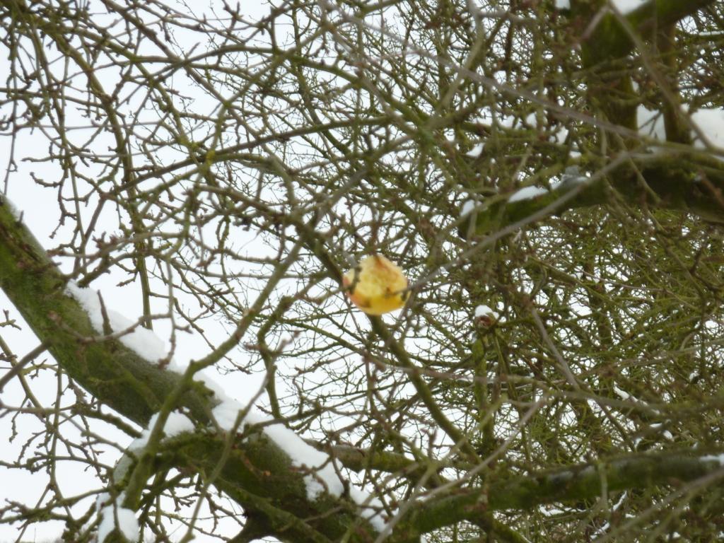 half opgegeten appel in de boom