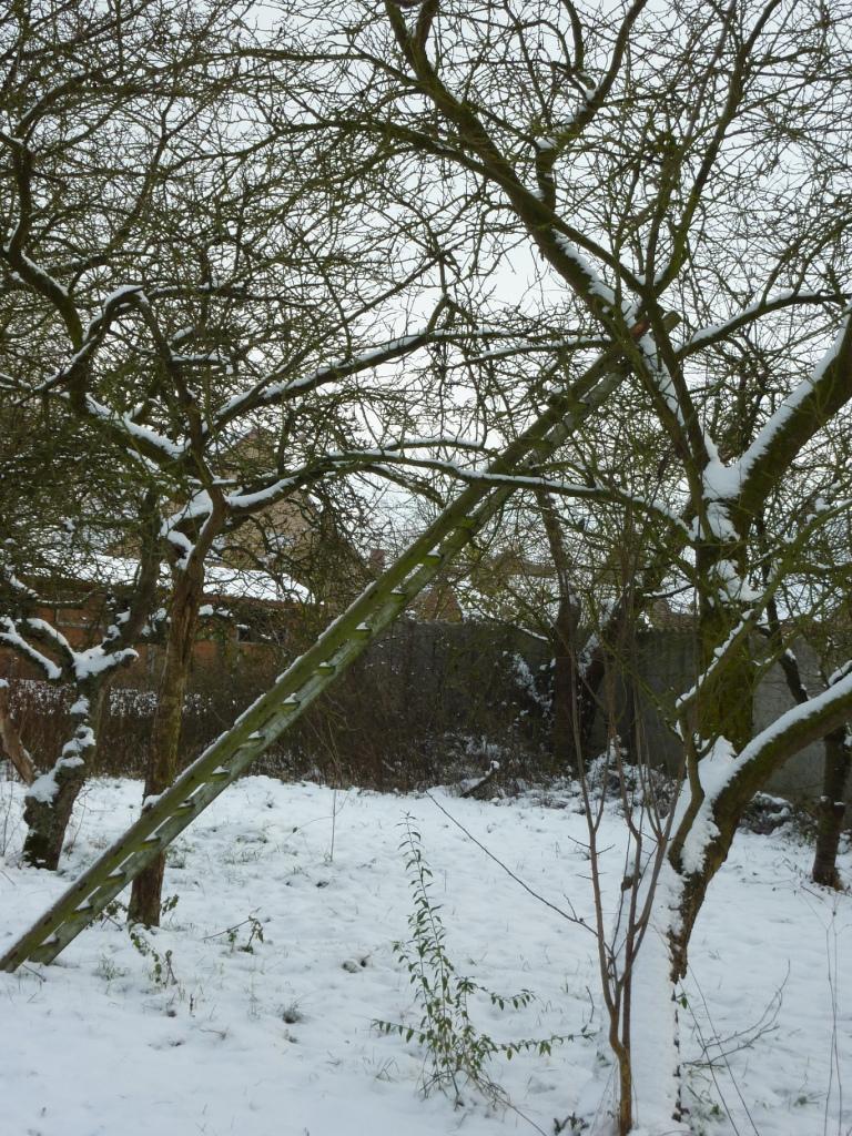 ladder tegen appelboom